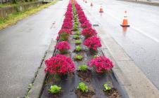 マイ・フラワーロード推進会による花の植栽